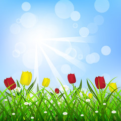 Floral background with sunlight, tulips and green grass