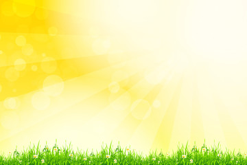 Fresh green grass with yellow bokeh and sunlight. Beauty natural