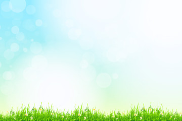 Fresh green grass with blue bokeh and sunlight. Beauty natural b