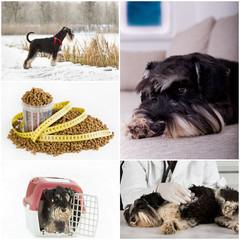 Dog life collage