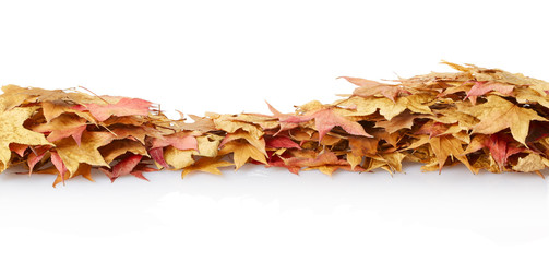 Autumn leaves border on white, clipping path