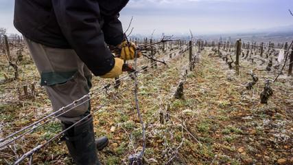 tailler la vigne en hiver