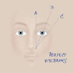 Perfect eyebrow / Schematic drawing of beautiful woman eyebrow