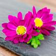 lila Blüten auf Schiefer