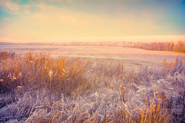 winter landscape at sunset. Field with dry grass