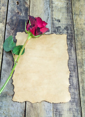 Fresh red rose and old paper on wooden background
