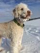 canvas print picture - Hund im Schnee