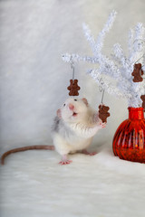 decorative rat eating chocolate chip cookies