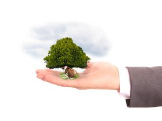 Baum und Rind auf geöffneter Hand
