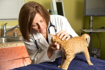 A Veterinarian in her Office Examining a Kitten