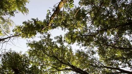 alberi nel parco steady cam