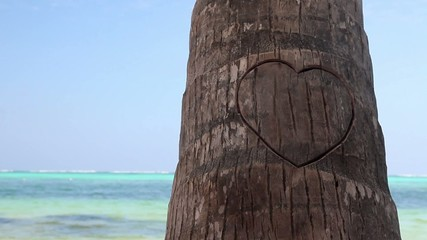 Heart cutted on palm tree on caribbean beach, Dominican Republic