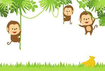 フレーム ジャングルのサル達