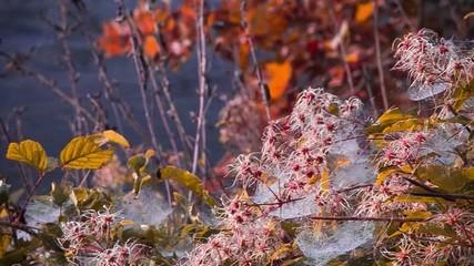 rugiada autunno fiume brina