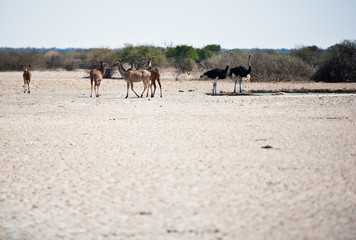 Deserto del Kalahari, Botswana, Africa