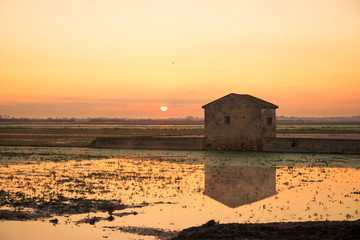 Rice paddy at sunrise