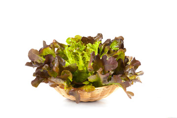 Oak Leaf lettuce isolated on white background