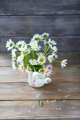 Daisies in white vase