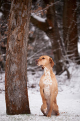 Hund im verschneiten Wald