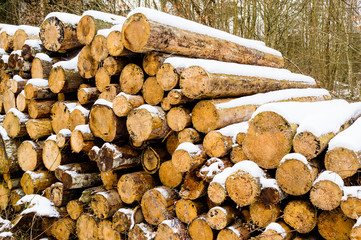 Timber logs in winter