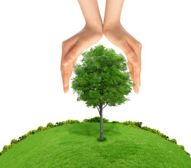 Concept of human hand protecting green tree. metaphor to nature,