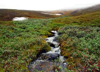 Creek meltwater.