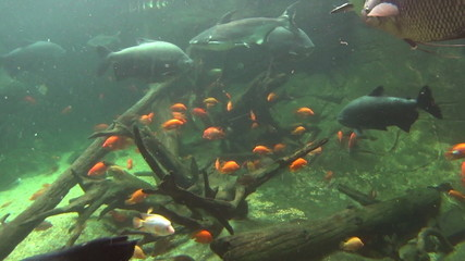 Underwater scene of fish swimming in green light.