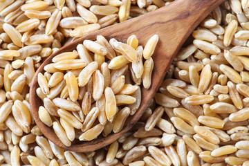 Spoonful of organic Kamut grain background