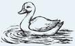 Floating duck. Vector sketch