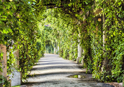 archway in the park at summer. - 77667922