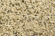 Hemp seed on background - 77669751