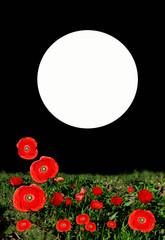 Amapolas, luna, noche, ilustración, tarjeta