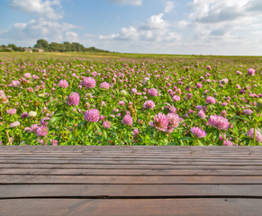 wood planks and pink clover flowers