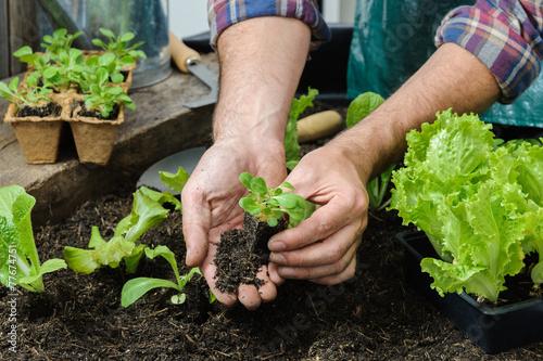 Leinwandbild Motiv Farmer planting young seedlings