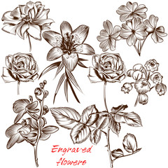 Collection of vector engraved flowers in antique style