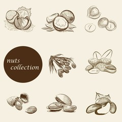 set of nuts collection. vector sketches