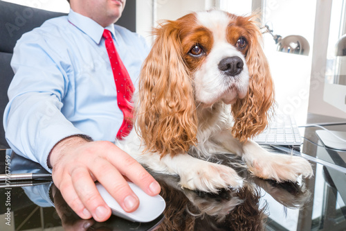 Keuken foto achterwand Hond Hund am Arbeitsplatz