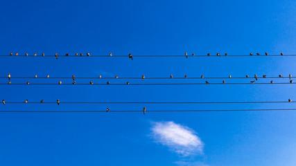Vogelpartitur