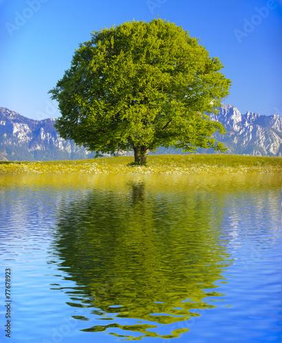 canvas print picture Baum Laubbaum mit Spiegelung im See