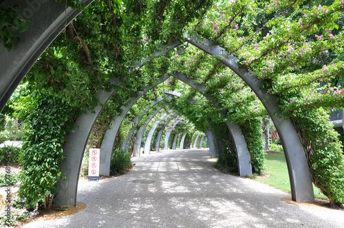 Rainforest Walk in Brisbane - 77680345