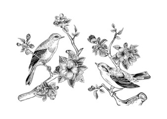 Vintage vector spring card. Birds on a branch.