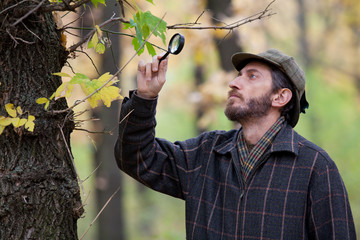 Man detective with a beard studying tree leaves in autumn forest