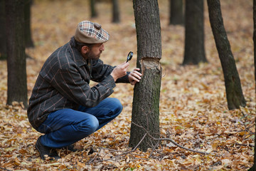 Bearded botanist studying the damaged tree trunk in autumn fores