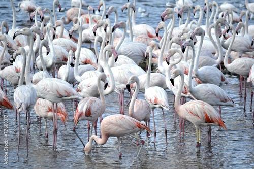 Foto op Aluminium Flamingo Flamingo1