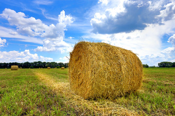 field with hay rolls at summer time