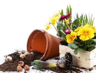 Frühlingsblumen pflanzen