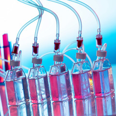 Growing biological culture, bottles the laboratory shaker