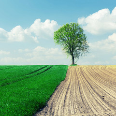 plowed field and meadow with grass and tree