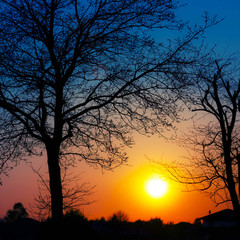 Silhouettes of trees at sunset