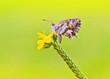 Obrazy na płótnie, fototapety, zdjęcia, fotoobrazy drukowane : mariposa en su flor